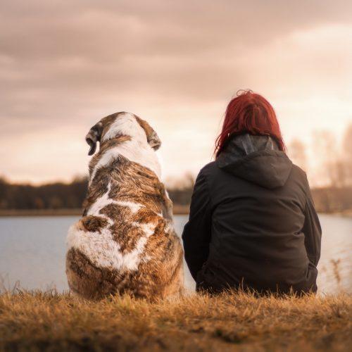Amanti degli Animali - Pet Sitter Professionista