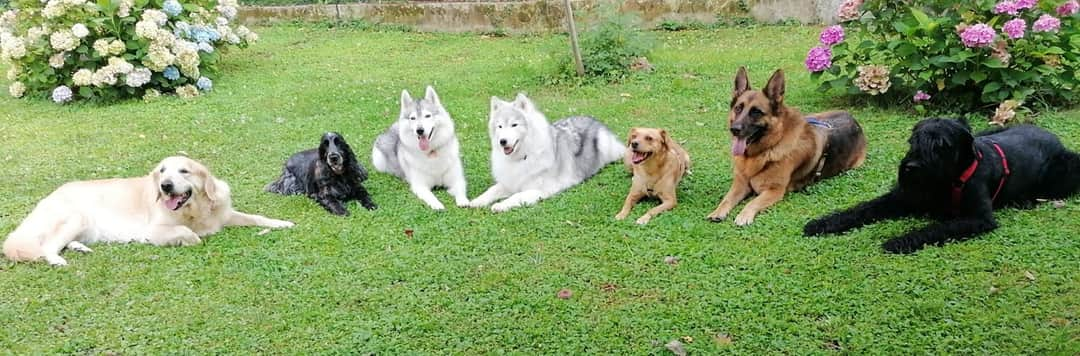 Family Pet Sitter OPSI